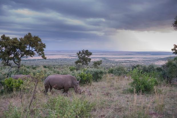 rhino (1)